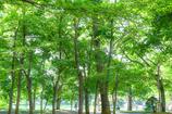 中島公園8