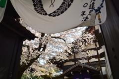 佛光寺裏門の桜