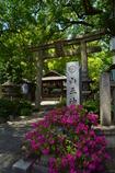 山王神社の躑躅