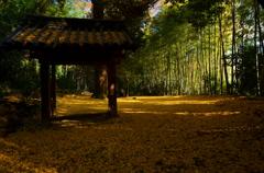 山崎聖天の黄絨毯