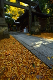 白雲神社の紅葉3