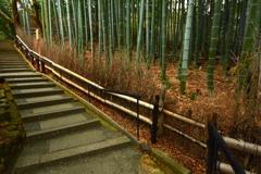 青蓮院門跡・庭園の竹林