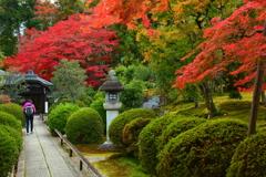 栄摂院参道の紅葉1