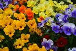 税務署のお花畑1