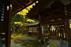 白雲神社手水舎の銀杏