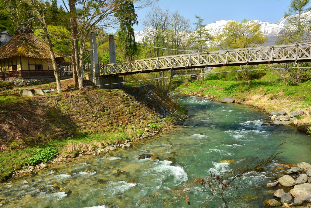 大出の吊橋・春