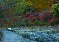 嵐山・保津峡の紅葉2