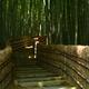 化野念仏寺・竹林の小道