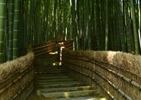 NIKON NIKON D7100で撮影した(化野念仏寺・竹林の小道)の写真(画像)
