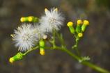 車折神社駅の春の花