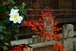 淳和院礎石の紅葉