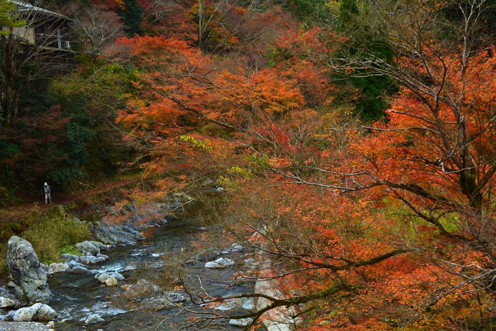 清滝・金鈴橋からの展望1