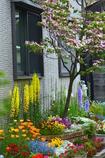 路地の奥は花園
