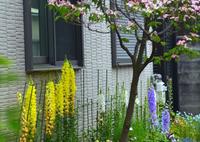 NIKON NIKON D7100で撮影した(路地の奥は花園)の写真(画像)