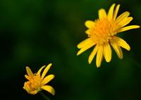 NIKON NIKON D7100で撮影した(花開く時)の写真(画像)