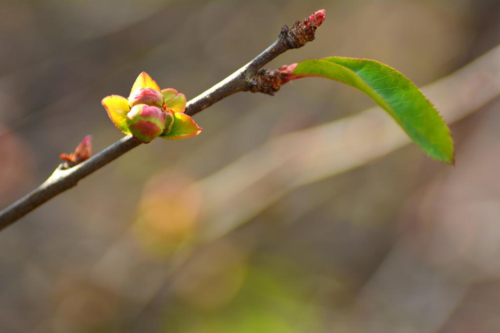 春へ猛ダッシュ!