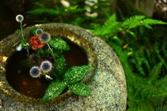 錦天満宮の生け花
