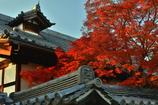 妙心寺金牛院の紅葉