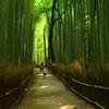 嵯峨野・竹林の道2
