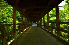 東福寺・偃月橋2