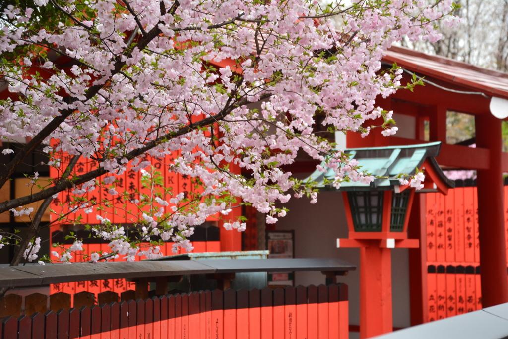 芸能神社の桜1