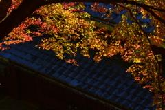 嵯峨鳥居本の秋2