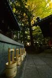 白雲神社の銀杏と水桶
