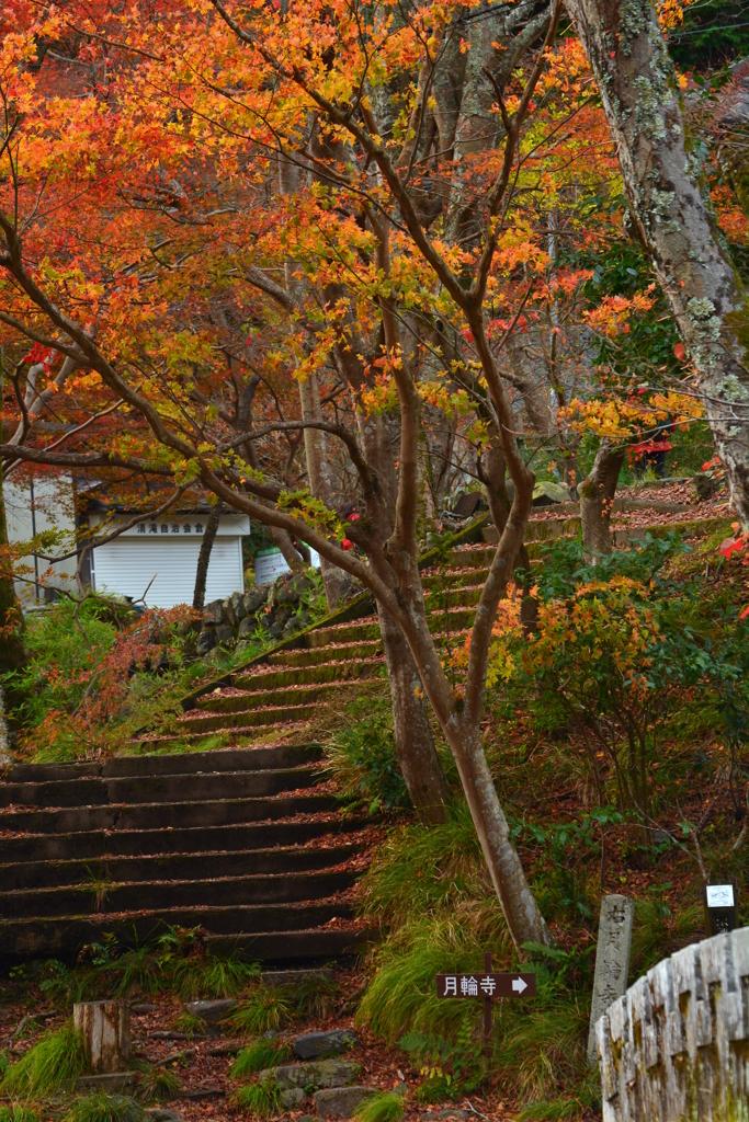清滝・金鈴橋からの展望2