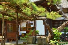 下御靈神社の松