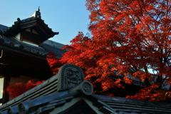 妙心寺金牛院の紅葉2