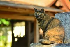 宗像神社の狛猫