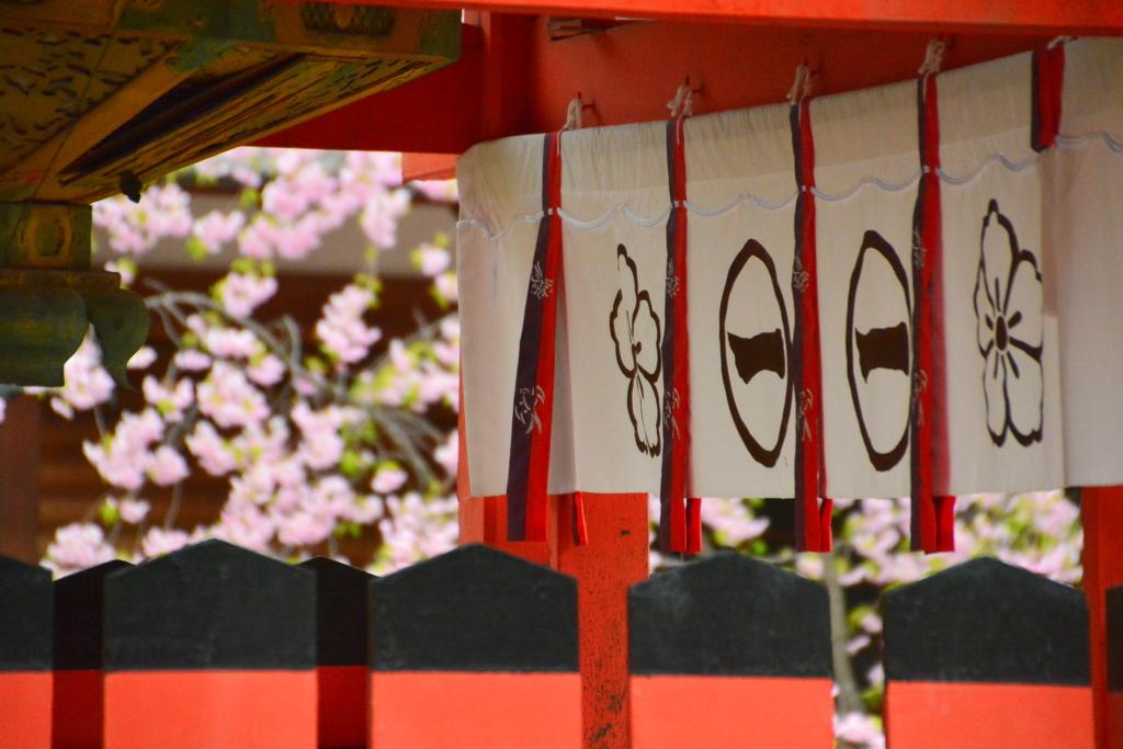 車折神社の桜4