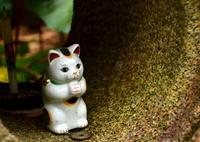 招き猫の祈り