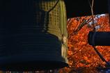 妙心寺鐘楼の紅葉