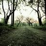 牧場の小道