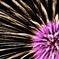 Fireworks (2017高瀬川納涼大花火大会1)