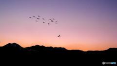 安曇野夕景(白鳥と)