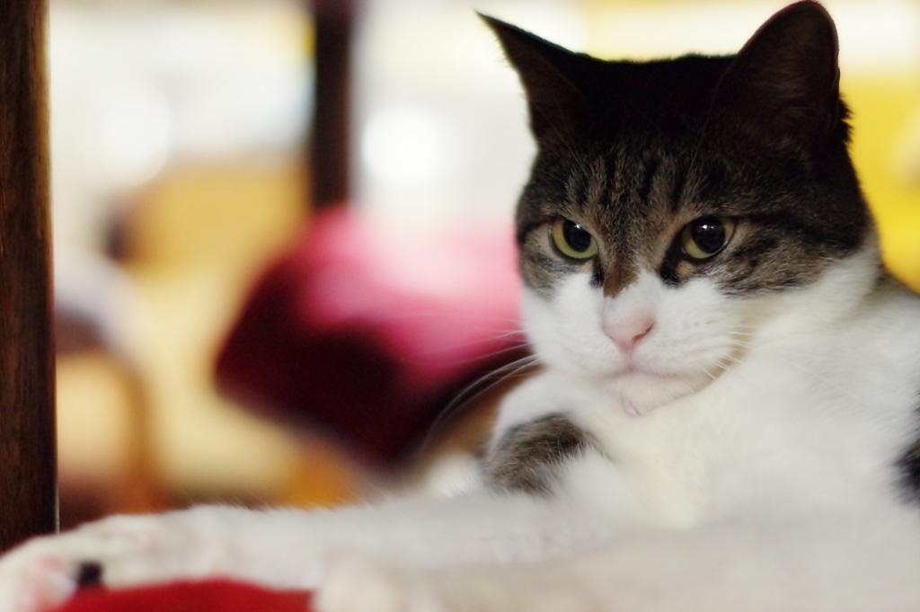 猫の椅子 (sora)