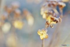 冬枯れの庭で*