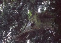CONTAX RTSIIIで撮影した(密林のゾウ)の写真(画像)
