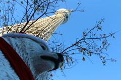 (旅の思い出) 白クマ、東京スカイツリーに現る!