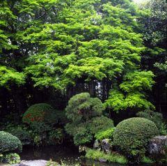 日本庭園・その参