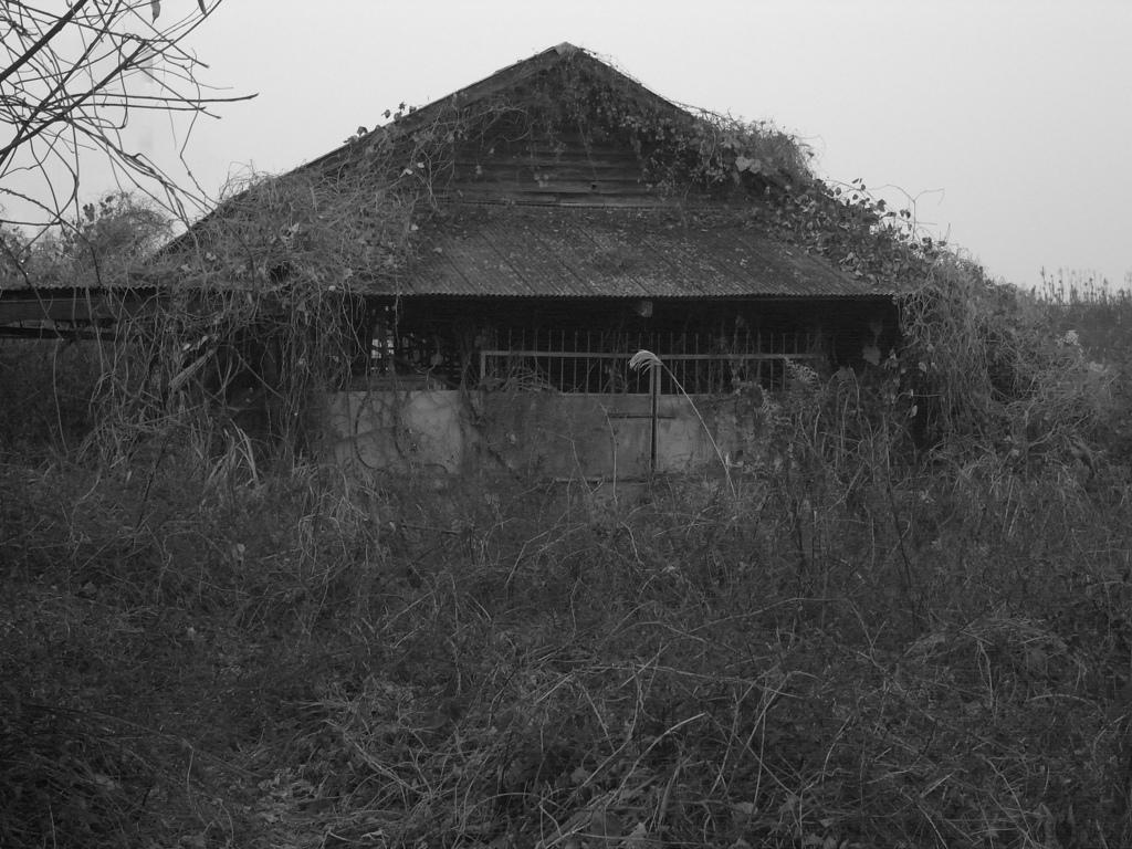 三井三池炭鉱の画像 p1_14