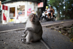 ジャングルの街に猿も繰り出す