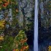 世界に誇る美しき滝 白水の滝