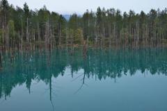 復活! 青い池