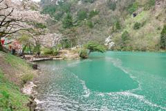 桜河(おうが)