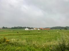 のどかな牧場光景・・・@ワーテルロー付近