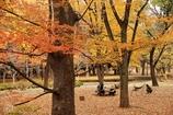 秋を楽しむ