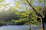 朝もやの 晴れゆく川の 両岸に 若葉あふれて 流れるほどに